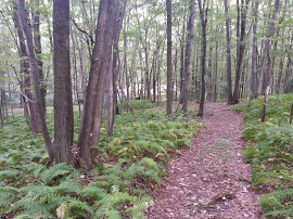 Beechwood-Hiking-Trails-2